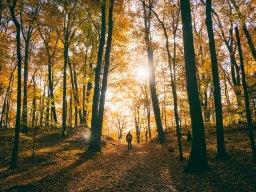 Der neue Waldspaziergang